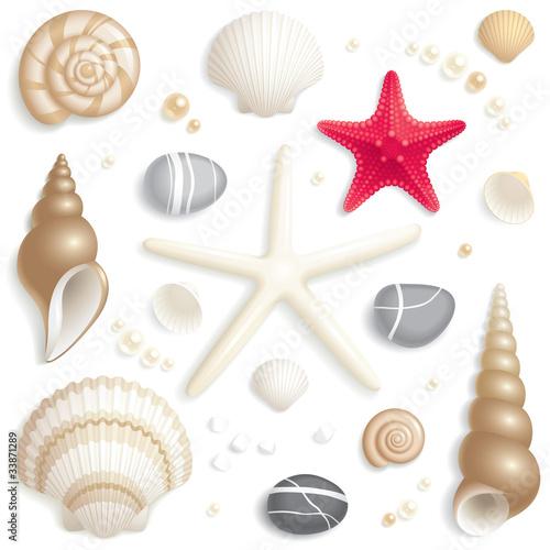 Fotografie, Obraz  Seashell set