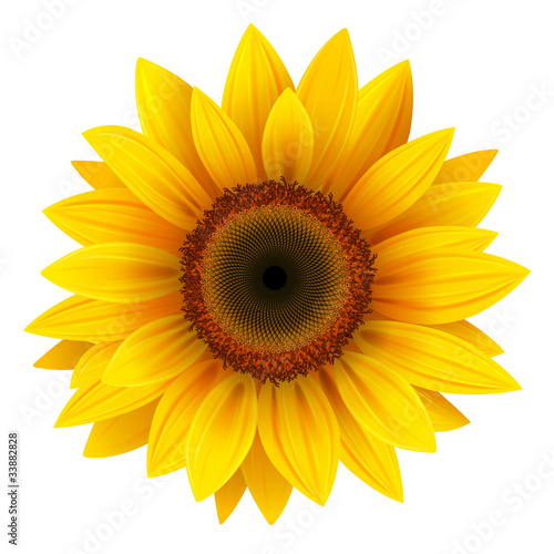 Fotografie, Obraz  Sunflower isolated, vector.