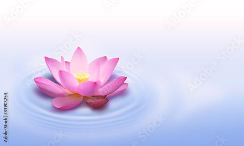 Poster de jardin Nénuphars Lotus flower