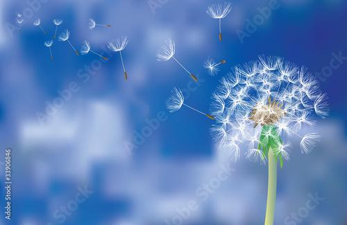 dandelion fly