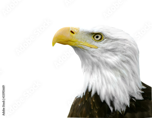 Poster Aigle An American Bald Eagle isolated on a white background.