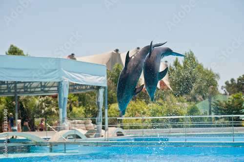 Poster Dolfijnen dolphins