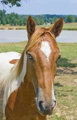FototapetaPortrait of a red with a white horse with colored eyes