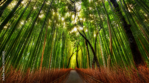 Tuinposter Bamboe The Bamboo Forest