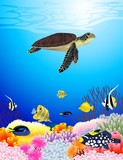 Beautiful sealife background