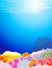 Beautiful Sealife Back