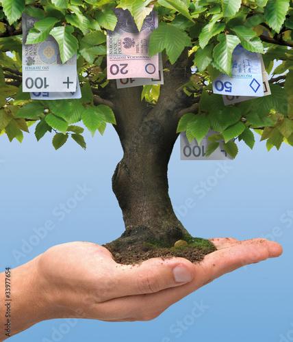 Fototapeta Money tree - polish money obraz