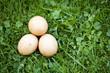 Świeże kurze jaja na trawie.