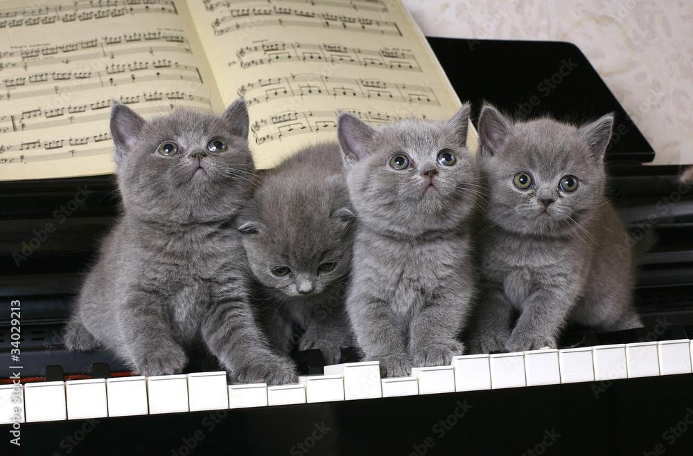 Cztery brytyjskie kotki na fortepianie <span>plik: #34029213 | autor: Larisa Kursina</span>