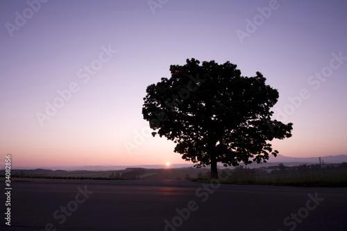 Photo sur Toile Rose 一本の木の日の出