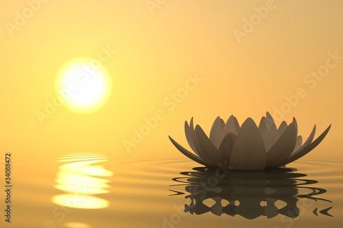 Fototapety, obrazy: Zen flower lotus on sunset