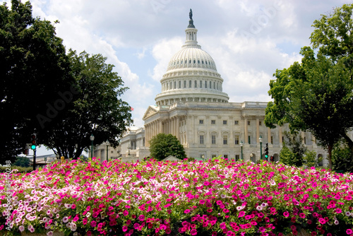 Fototapeta US Capitol building with summer flowers obraz
