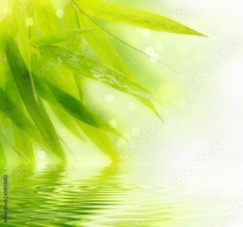 Naklejka dekoracyjna Wet bamboo leaves with reflection in water.