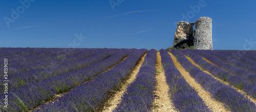 Fotobehang Lavendel tour en ruine dans champs de lavande