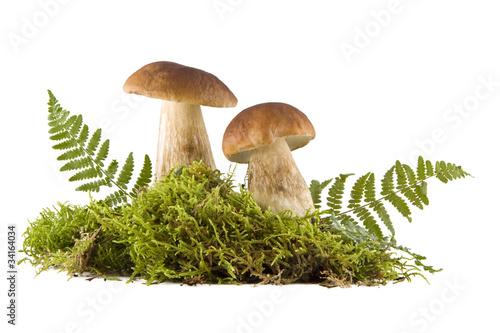 Fototapeta Two fresh mushrooms obraz