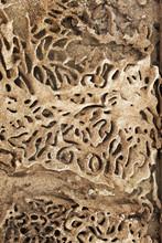 Termite Tracks Through Indian ...