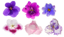 Six Isolated Violet Flowers