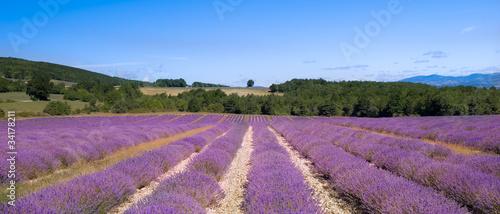 Tuinposter Lavendel plateau d'albion et ses champs de lavande