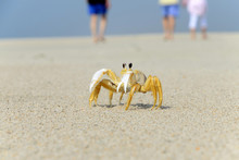 Ghost Crab On The Beach With Family Walking On Background