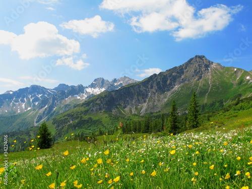 Fotografie, Obraz  Blumenwiese im Hochgebirge