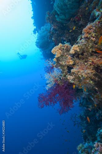 Scuba diver exploring a tropical coral reef