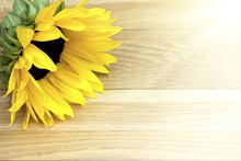 Sunflower Laying On A Wooden Table