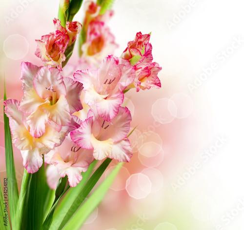 projekt-granicy-z-kwiatem-jesieni-gladiolus