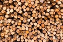 Stack Of Tree Stump