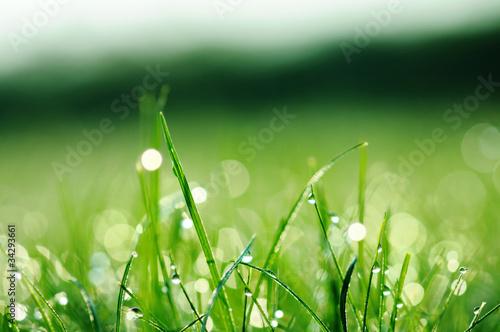 swieza-zielona-trawa-z-wodnymi-kroplami