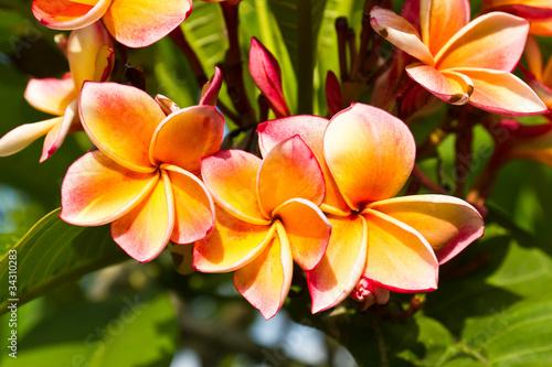 lan-thom-kwiat
