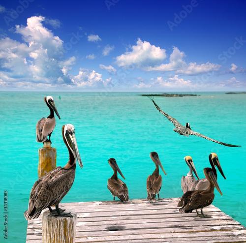 Foto op Plexiglas Caraïben Caribbean pelican turquoise beach tropical sea