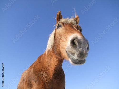 Foto op Canvas Paarden Pferd aus Froschperspektive