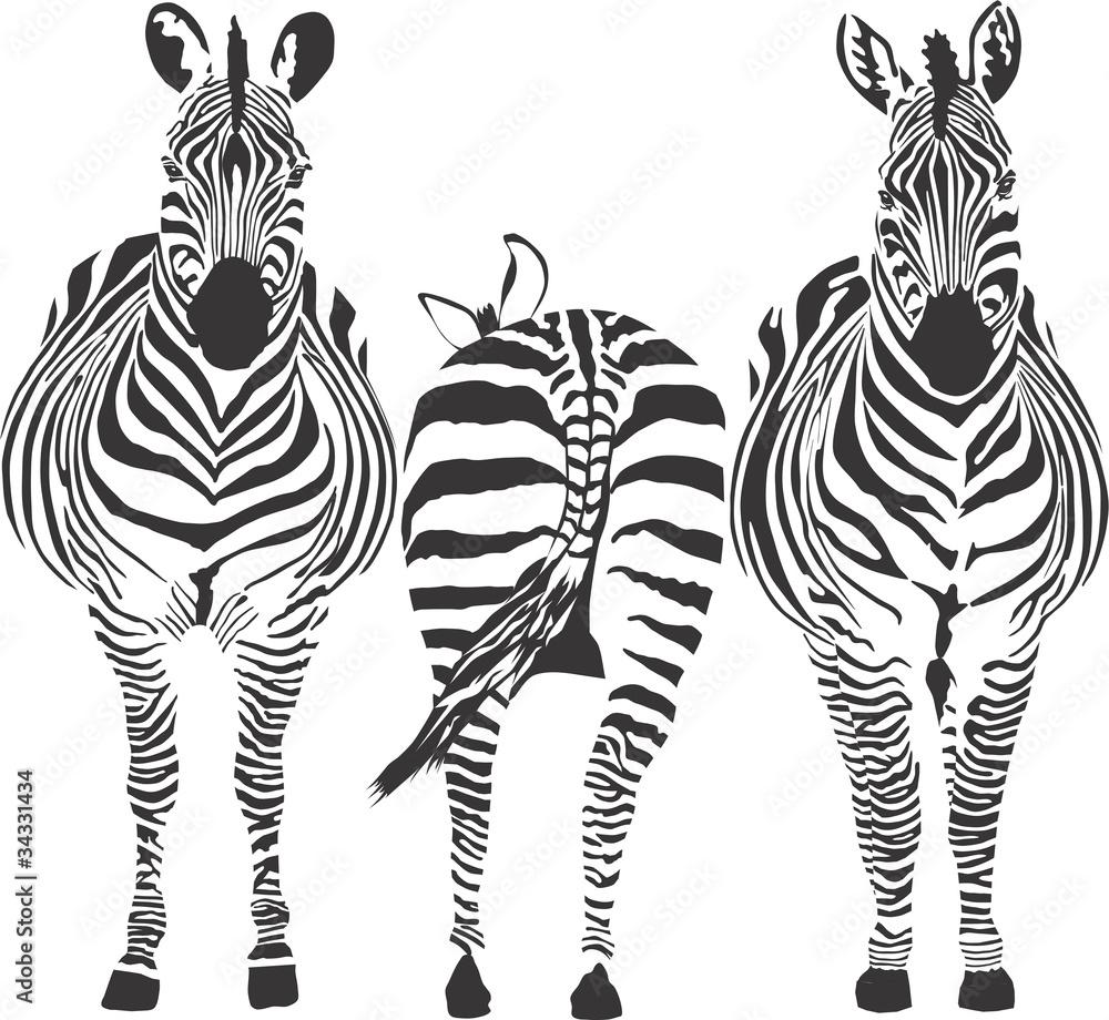 Fototapety, obrazy: Zebras