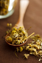 Dried Camomile Flowers On Wooden Spoon