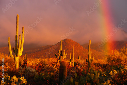 Staande foto Arizona Rainbow sunset at the Saguaro National Park, Arizona, USA