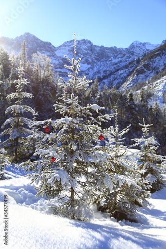 Photo  Weihnachtsbaum in der Landschaft