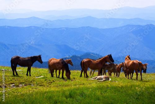 stado-koni
