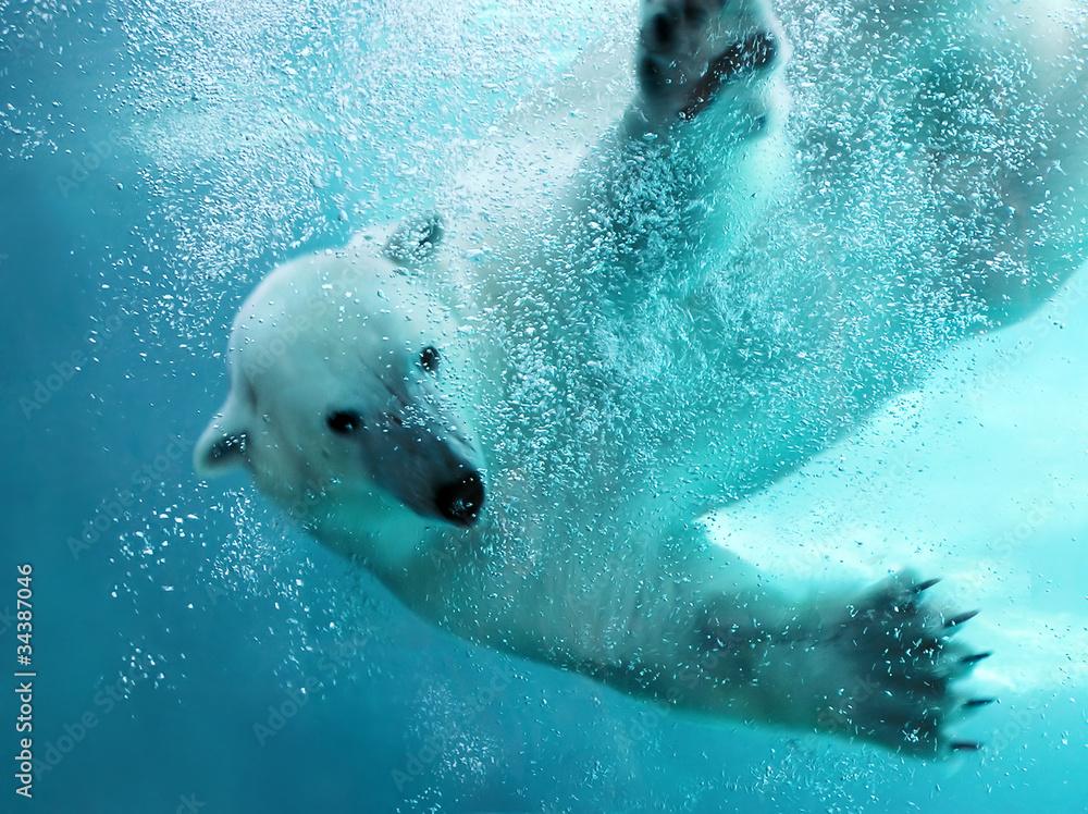 Fototapety, obrazy: Polar bear underwater attack