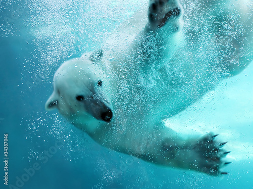 Foto op Canvas Ijsbeer Polar bear underwater attack