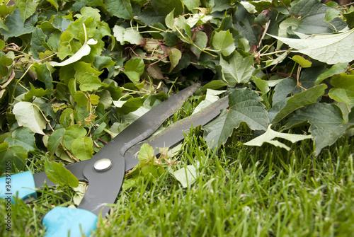 Papiers peints Jardin Gardening hedge trimmer