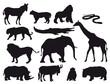 ANIMALES SELVA