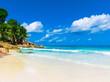 Shore Palms Panorama