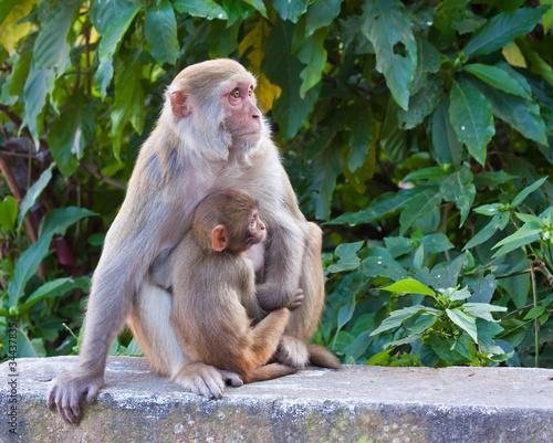 In de dag Baby Monkey with Mother
