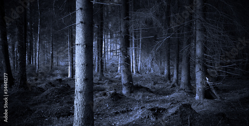 Wall Murals Forest Spooky forest