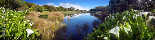 Naklejki krajobraz arums-wokol-piton-de-l-39-eau-reunion-national-park