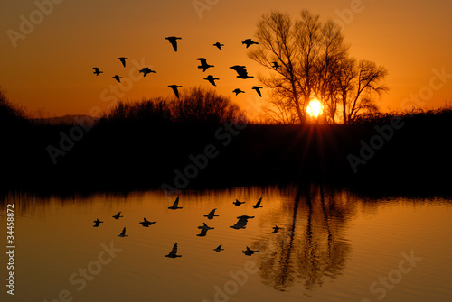 Fotografie, Tablou Evening Ducks