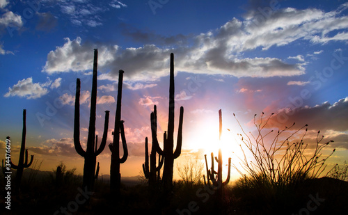 Papiers peints Arizona Sun set and Saguaro cactus in Saguaro national park