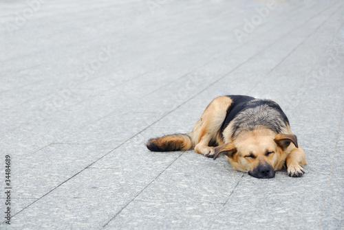 Foto  Dog on the sidewalk