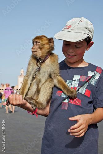 Photo  Marrakech : Dresseur de singe Magot