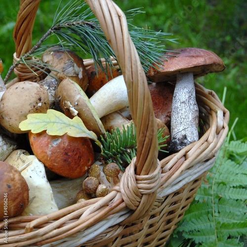 Fotografie, Obraz  грибы